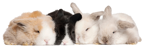 Natural Fabrics Obtained From Animals - Angora Rabbits