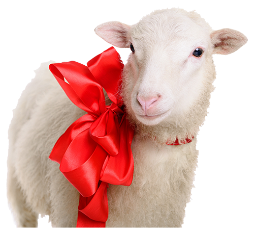 Natural Fabrics Obtained From Animals - Sheep Wool