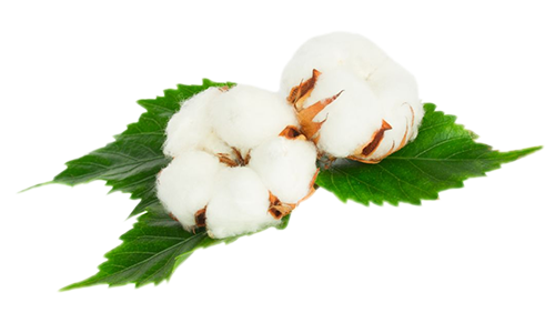 Natural Fabrics Obtained From Plants - Cotton